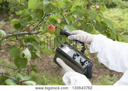 Measuring radiation levels of apricot in the orchard