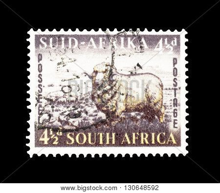 SOUTH AFRICA - CIRCA 1953 : Cancelled postage stamp printed by South Africa, that shows Merino ram and sheep.