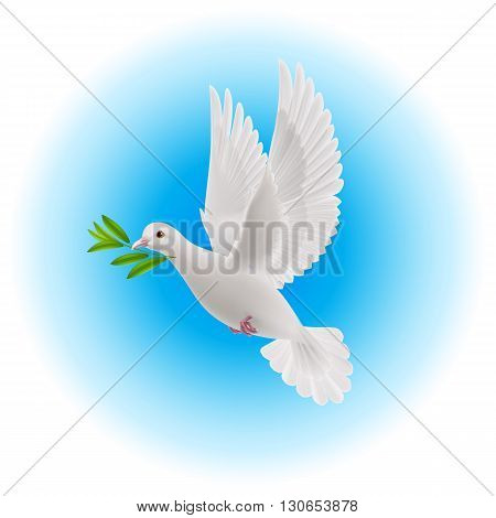 White dove flying with olive twig in its beak in blue sky