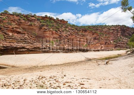Banded tumblagooda sandstone cliffs in the valley of the Murchison River gorge in Kalbarri National Park with native flora and dry riverbed under a blue sky with clouds in Western Australia.