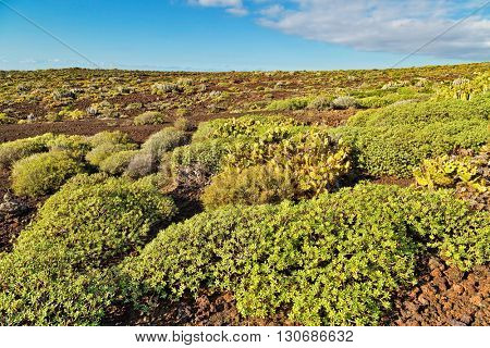 Landscape with prickly bushes on foreground near Punto Teno Lighthouse in north-west coast of Tenerife, Canarian Islands