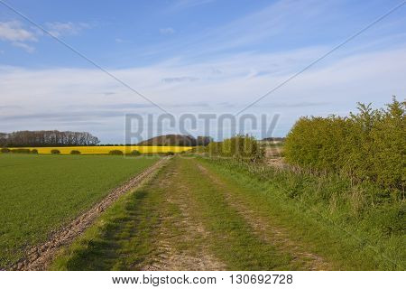 Grassy Footpath In Agricultural Scenery