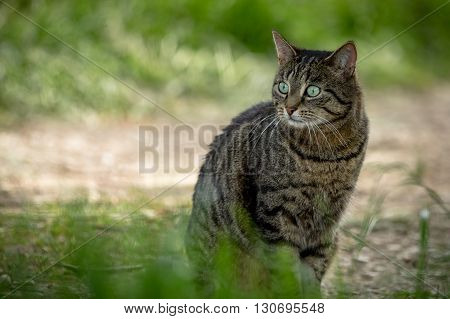 Wild cat sitting on the ground in the forest