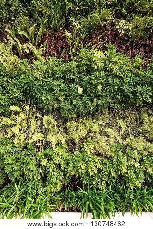 Green wall , eco-friendly vertical garden wall