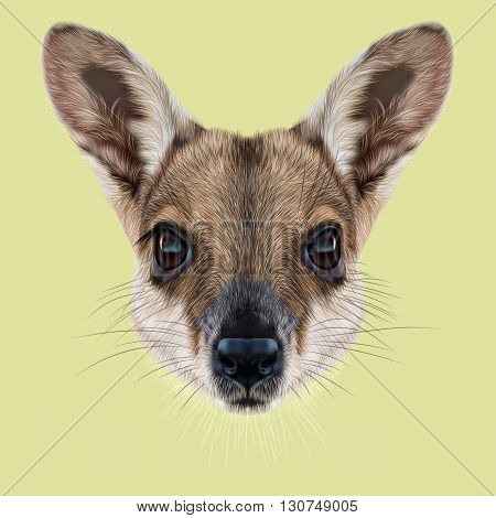 Illustrated Portrait of Wallaby. Cute face of wild Australian mammal Wallaby on yellow background.