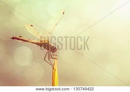 Dragonfly and blur bokeh background Beautiful closeup silhouette dragonfly on the grass
