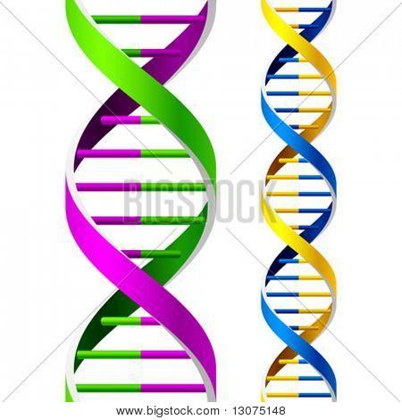 Vector DNA Strands. Seamless. Duplicate for lengthening.