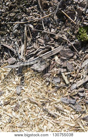 Pile of wood sawdust in forest in garden