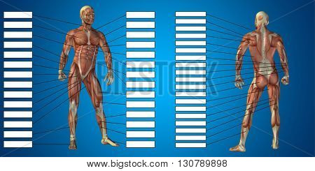 3D illustration of a concept or conceptual human man anatomy and muscle text isolated on black background poster