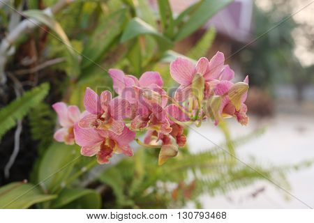 Orchid flower, this would be the most beautiful flowers.