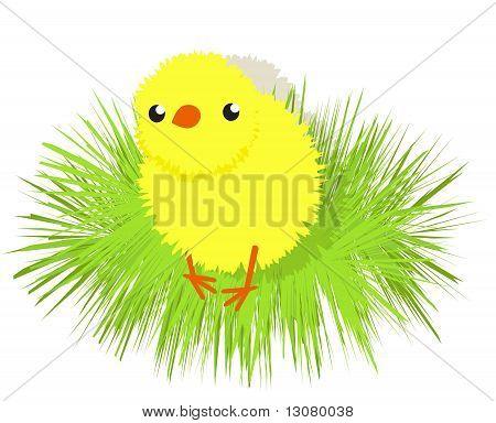 A little cute downy cartoon chicken