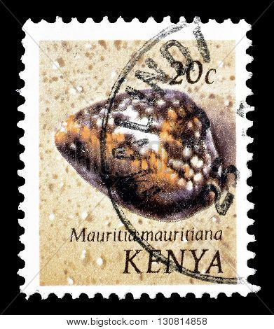 KENYA - CIRCA 1971 : Cancelled postage stamp printed by Kenya, that shows Humpback Cowry.