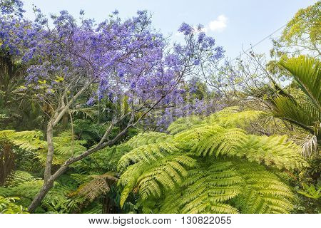Tropical Trees and blooming Jacaranda Tree in San Diego California