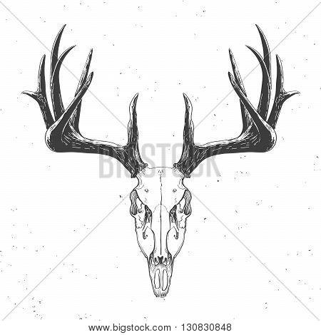 deer skull on white hand drawn vintage illustration