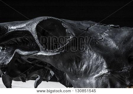 photo of black cow skull. fragment. eye socket.