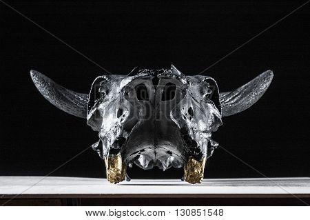 Photo of bulls skull on black background. Face view.