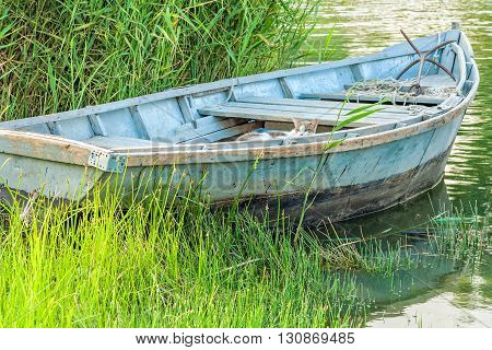 Old fishing boat and cat in the reeds on the river in the evening sun