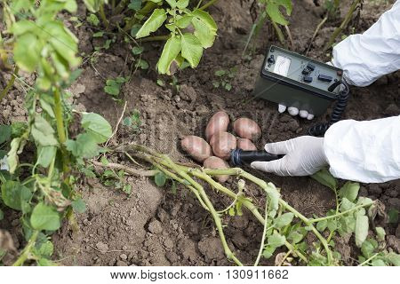 Measuring radiation levels of potato in the garden