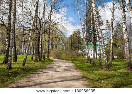 Alley of birches in Yasnaya Polyana, Russia