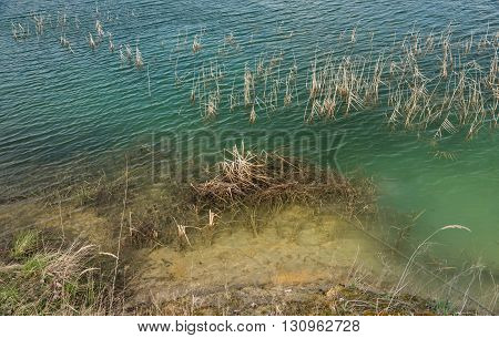 The grass that grows in the blue green water of the artificial lakes over an old sunken mine silica sand with a layered coast