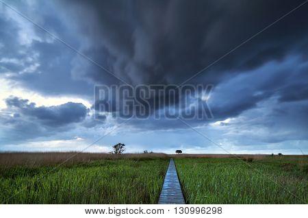 wooden path on swamp to observation tower Nieuwe Statenzijl Netherlands