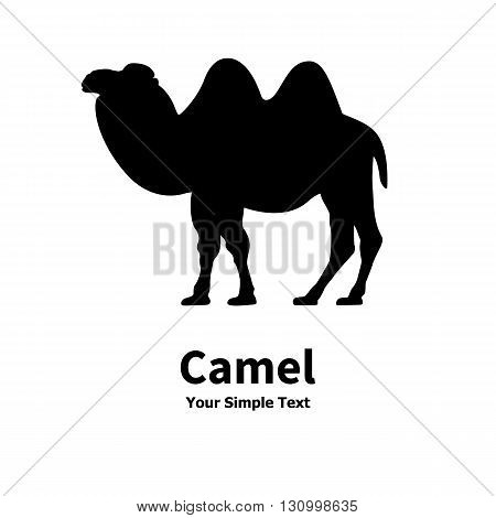 Vector illustration of a silhouette of a Bactrian camel. On an isolated white background.