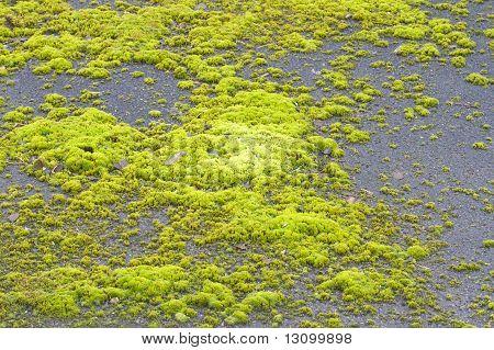 Moss on driveway