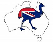 Detailed and colorful illustration of kassowary Australia poster