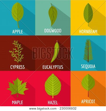 Tree Sheet Icons Set. Flat Set Of 9 Tree Sheet Vector Icons For Web Isolated On White Background