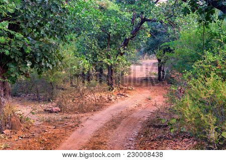 Scenic View Of Road Leading Through Deciduous Forest In Ranthambore National Park, India. Selective