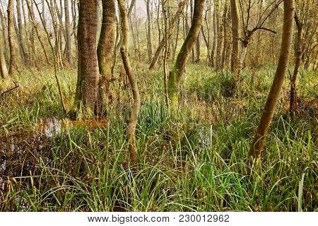 Swampy bog lanscape in Finland