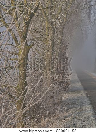 Sunrise On A Misty Frosty Morning On A Path With A Row Of Trees