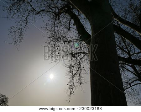 Bald Trees In Backlight And Blue Sky