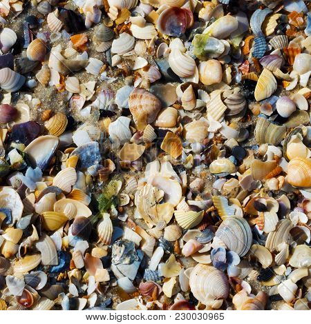 Natural Background Of Seashells On Wet Sand Beach At Sun Summer Day. View From Above.