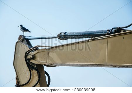 Seagull Standing On The Arm Of An Excavator Machine