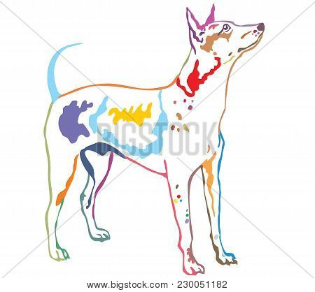 Colorful Contour Decorative Portrait Of Standing In Profile Dog American Hairless Terrier, Vector Is