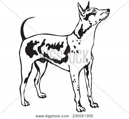 Decorative Contour Portrait Of Standing In Profile  American Hairless Terrier, Vector Isolated Illus