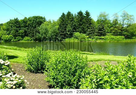 Pretty Lake Scene With Lush Green Grass, Evergreen Trees, And Blue Sky
