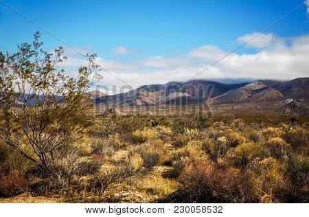 Green Foliage And Clouds Hanging Over Mountains In Mojave Desert In A Spring Time Afternoon Landscap