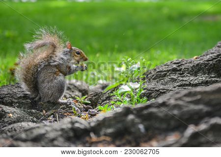 A squirrel eats nut in a park at Capitol Hill Grounds - Washington DC USA