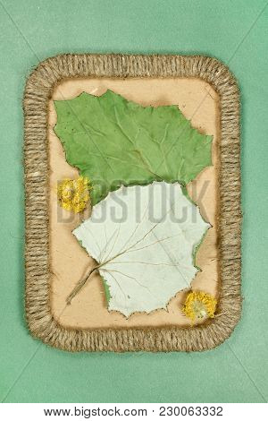 Herbarium. Coltsfoot, Foalfoot. Dry Plants In Framework Made Of Jute Thread. Scrapbooking. Dried Flo