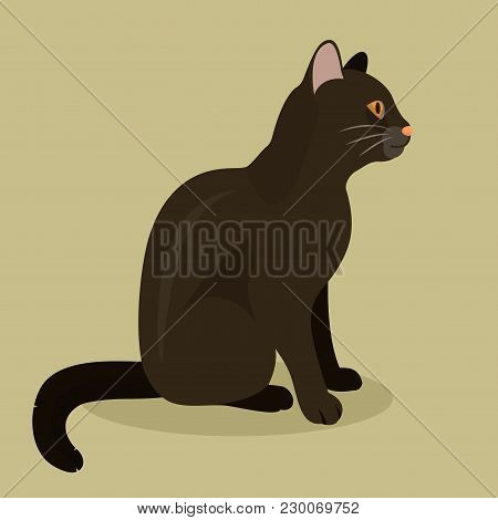 Black Cat Cute Kitty Pet Cartoon Cute Animal Character Illustration. Mammal Human Friend Cat Breed A