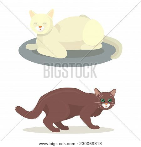 Different Cat Cute Kitty Pet Cartoon Cute Animal Character Set Illustration. Mammal Human Friend Cat