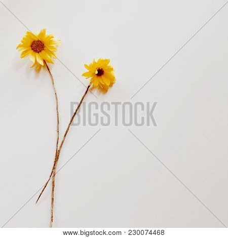 Two Yellow Chrysanthemums With Dry Branch. fiat Lay. Top View.