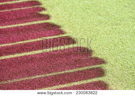 Sun Light Casting Pink / Red Shadow On Synthetic Grass