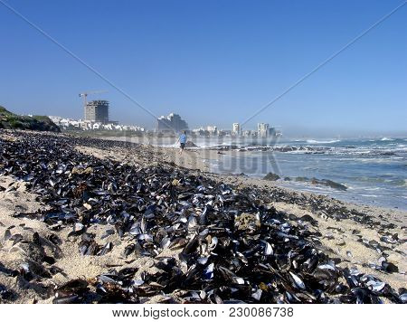 From Blouberg Strand, Cape Town, South Africa, With Sea Shells Washed Up On To The Beach In The Fore