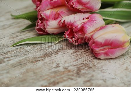 Close Up Of Pink Fresh Spring Bouquet Of Tulip Flowers Over Rustic Gray Wooden Background With Copy