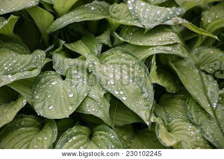 Host Plant Green Nature Leaf Garden Background Rain Drops
