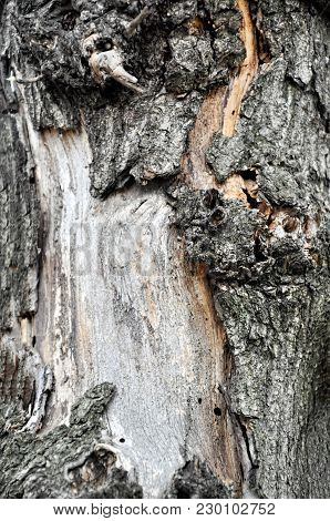Pine Bark. Texture Pine Bark. Pine Bark Background. Pine. Tree Bark. Bark. Brown Bark Texture. Natur