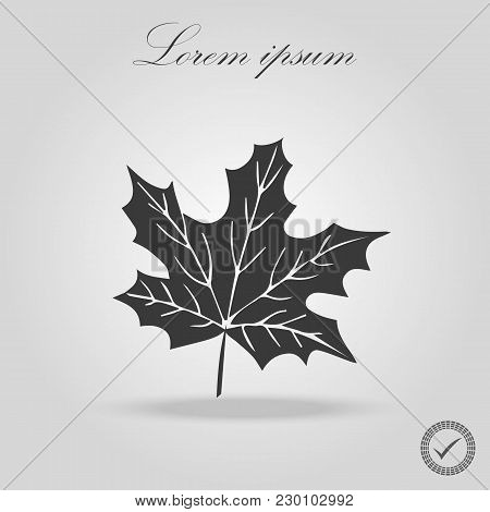 Icon Black Silhoutte Maple Leaf. Black Line Art Maple Leaf Isolated Background. Canada. Maple Leaf V